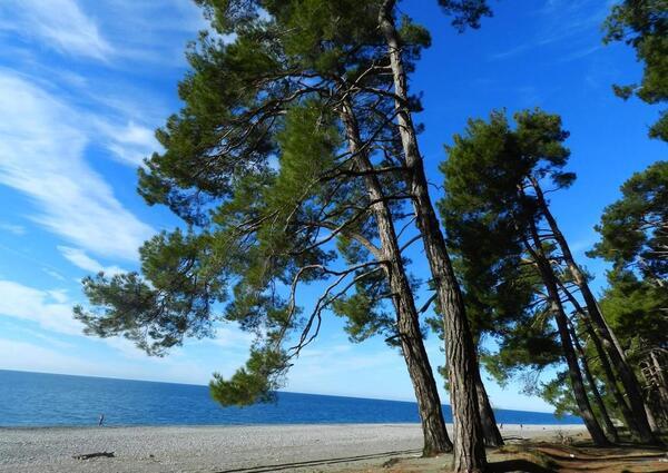 Пляж города Пицунда