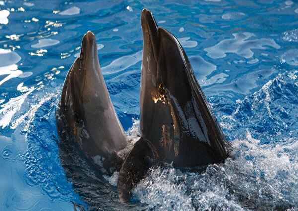 танец дельфинов представление в Пицунде