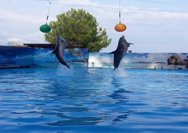 дельфинарий курорт Пицунда